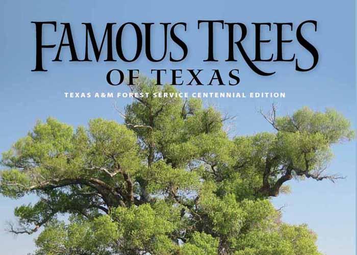 Zachary Taylor Tree